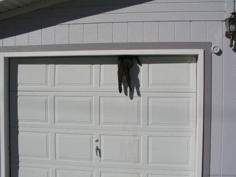 garage-door-cat & garage-door-cat | Three Times the Fun Pezcame.Com